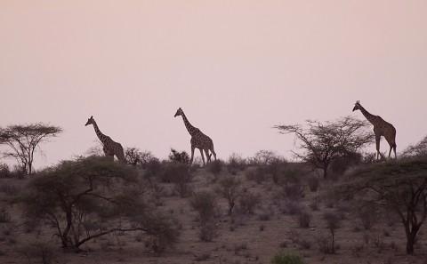 Kenya-othermammals-040.jpg