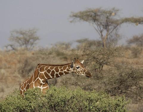 Kenya-othermammals-041.jpg