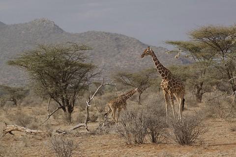 Kenya-othermammals-042.jpg