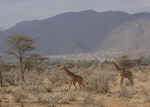 Kenya-othermammals-043.jpg