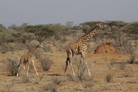 Kenya-othermammals-044.jpg