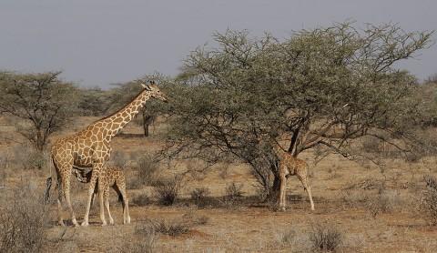 Kenya-othermammals-045.jpg
