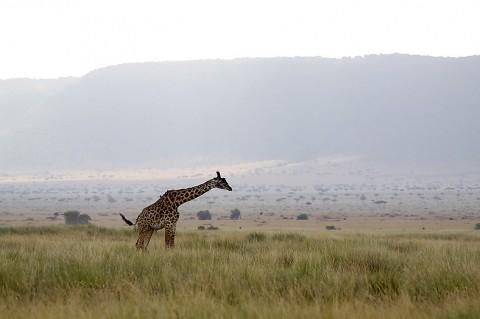 Kenya-othermammals-047.jpg