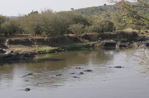Kenya-othermammals-052.jpg