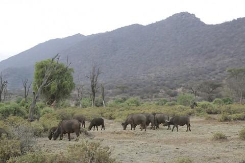 Kenya-othermammals-055.jpg