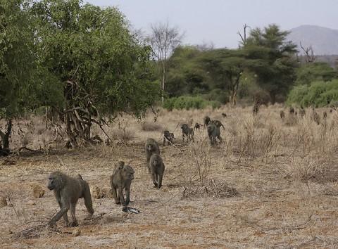 kenya-primates-021.jpg