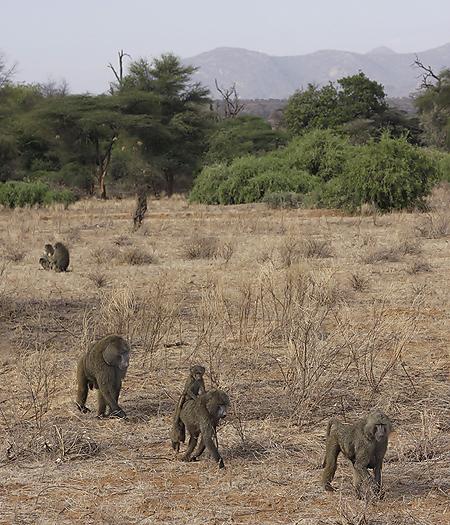 kenya-primates-022.jpg