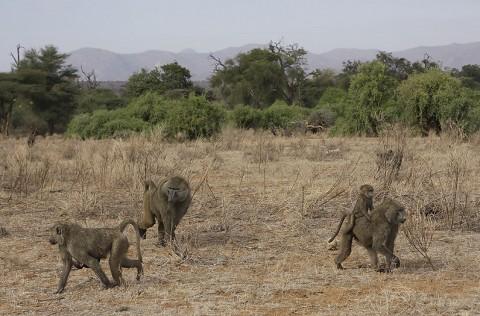 kenya-primates-023.jpg