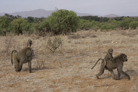 kenya-primates-024.jpg
