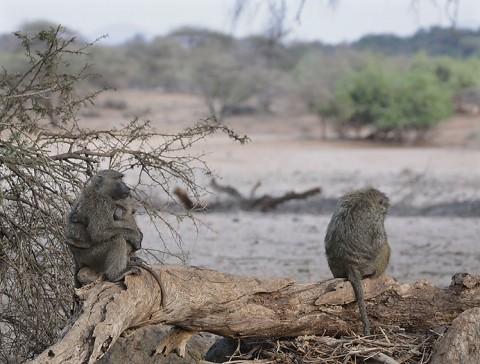 kenya-primates-025.jpg