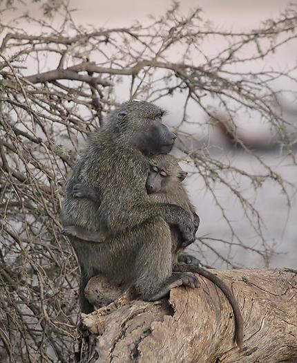 kenya-primates-026.jpg