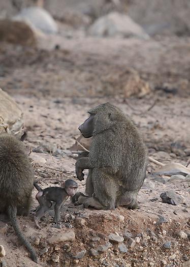 kenya-primates-027.jpg