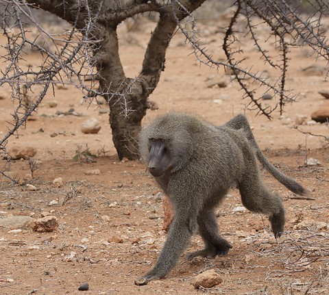 kenya-primates-028.jpg