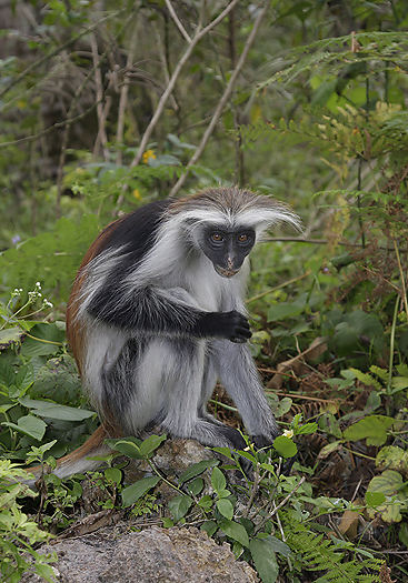 kenya-primates-030.jpg