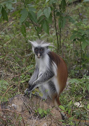 kenya-primates-031.jpg