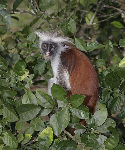kenya-primates-032.jpg
