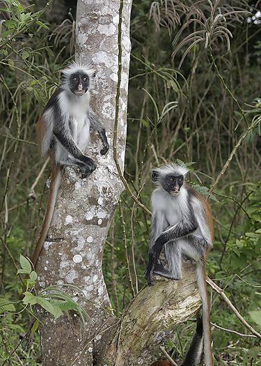 kenya-primates-033.jpg