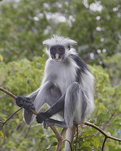 kenya-primates-034.jpg