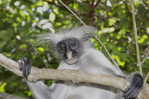 kenya-primates-035.jpg