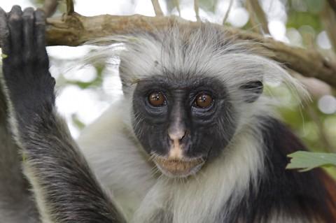 kenya-primates-036.jpg