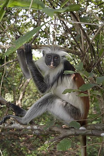 kenya-primates-037.jpg