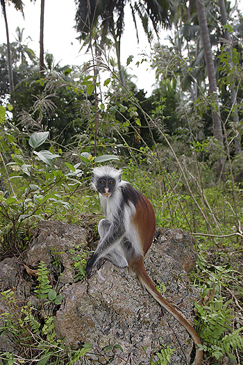 kenya-primates-038.jpg