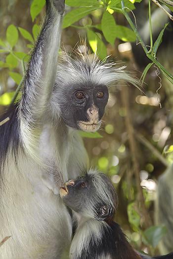 kenya-primates-039.jpg