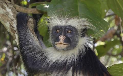 kenya-primates-040.jpg