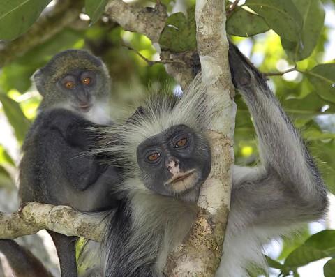 kenya-primates-041.jpg