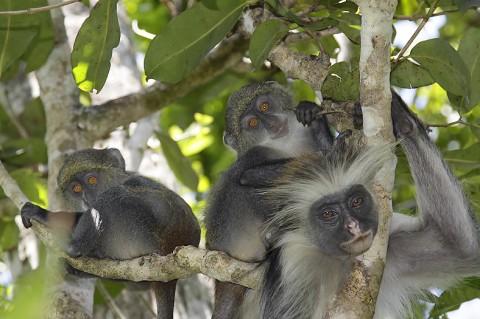 kenya-primates-042.jpg