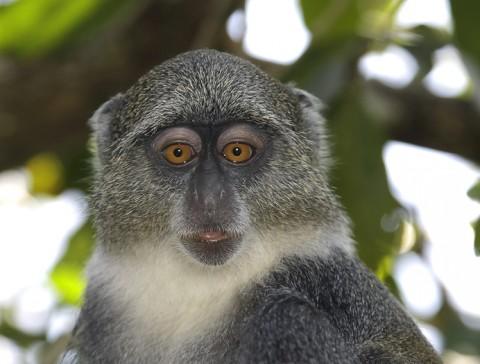 kenya-primates-043.jpg
