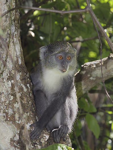 kenya-primates-044.jpg