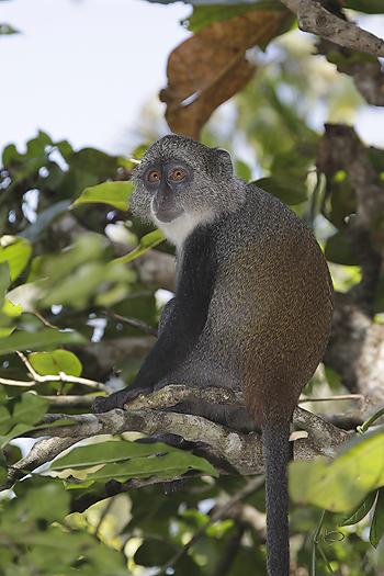 kenya-primates-045.jpg