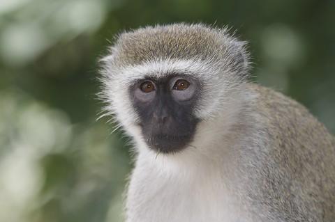 kenya-primates-050.jpg