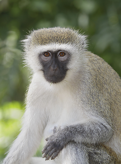 kenya-primates-051.jpg