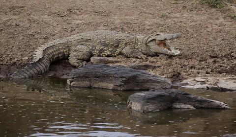 Kenya-reptiles-021.jpg