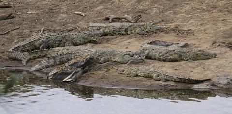 Kenya-reptiles-022.jpg