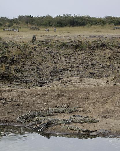 Kenya-reptiles-023.jpg