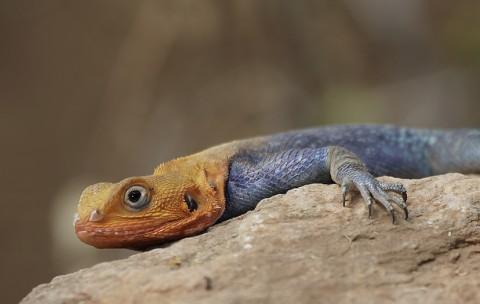 Kenya-reptiles-042.jpg