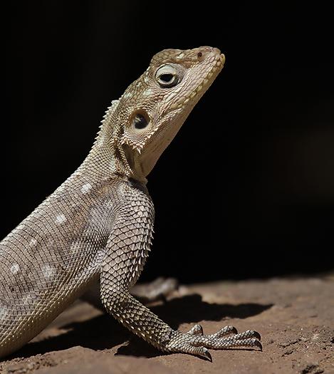 Kenya-reptiles-044.jpg