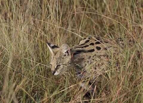 kenya-carnivore-066.jpg