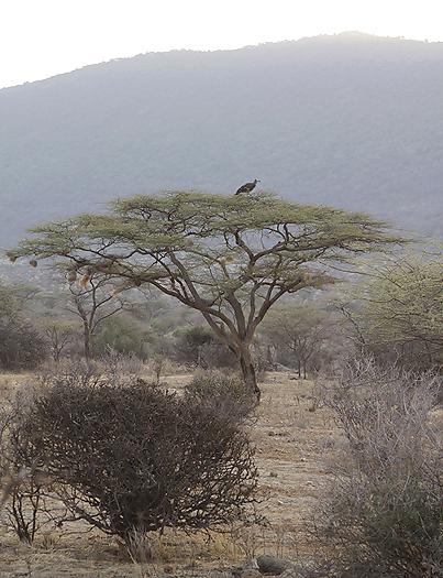 kenya-vultures-022.jpg