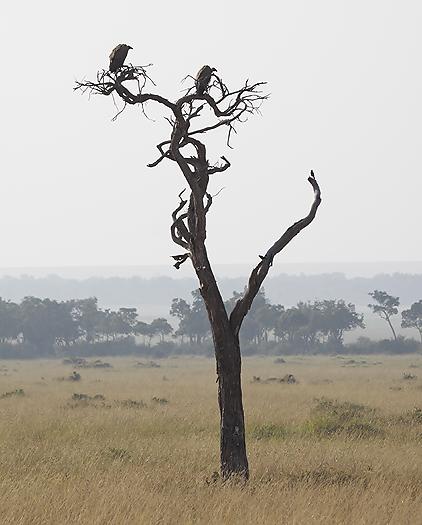 kenya-vultures-026.jpg