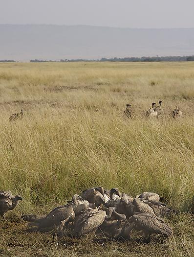 kenya-vultures-027.jpg