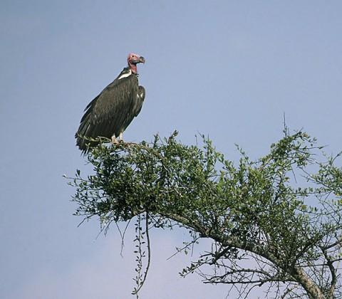 kenya_birds21.jpg