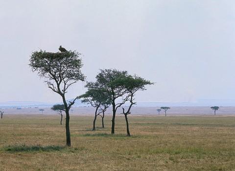 kenya_birds22.jpg