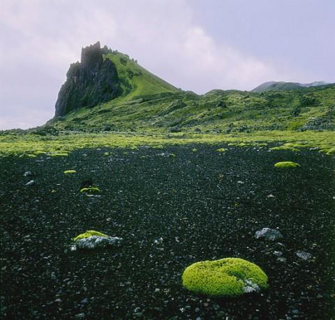 landscape74.jpg