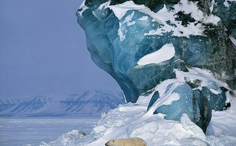 polarbear3.jpg