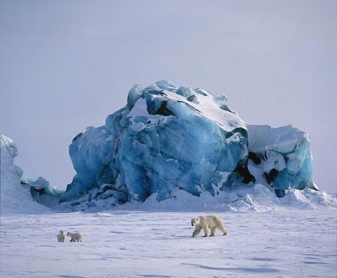 polarbear4.jpg