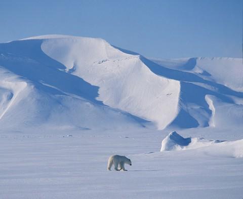 polarbear7.jpg